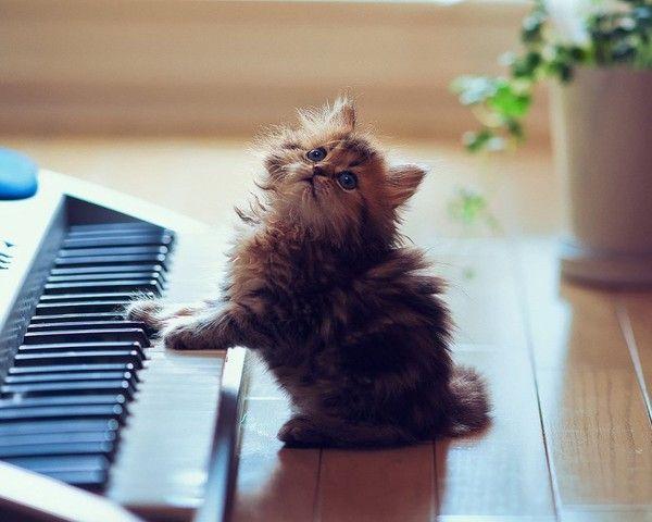Quelque notes de musiques.